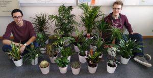 """Neues Büropflanzenprojekt """"flora@labora"""" beginnt"""