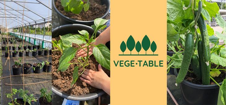 Vege.Table – Studentischer Gemüsegarten